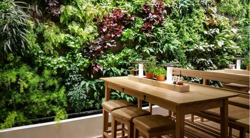 зеленые стены, вертикальное озеленение