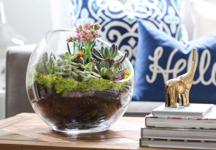 флорариум в гостиной
