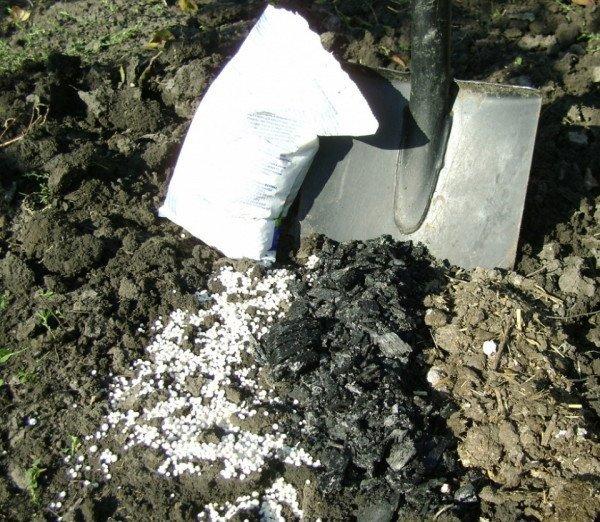 Удобрения на грунте