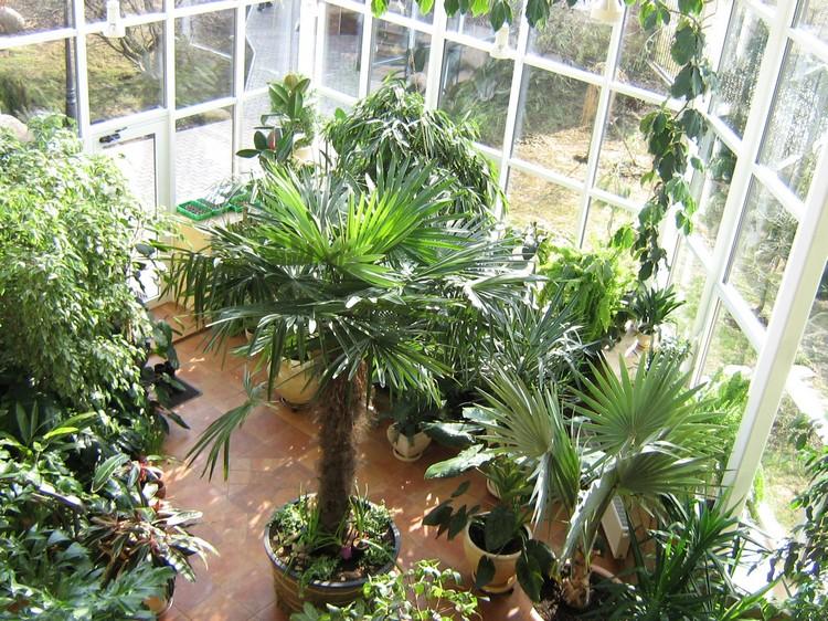 Стили оформления зимнего сада: тропические и другие виды растений