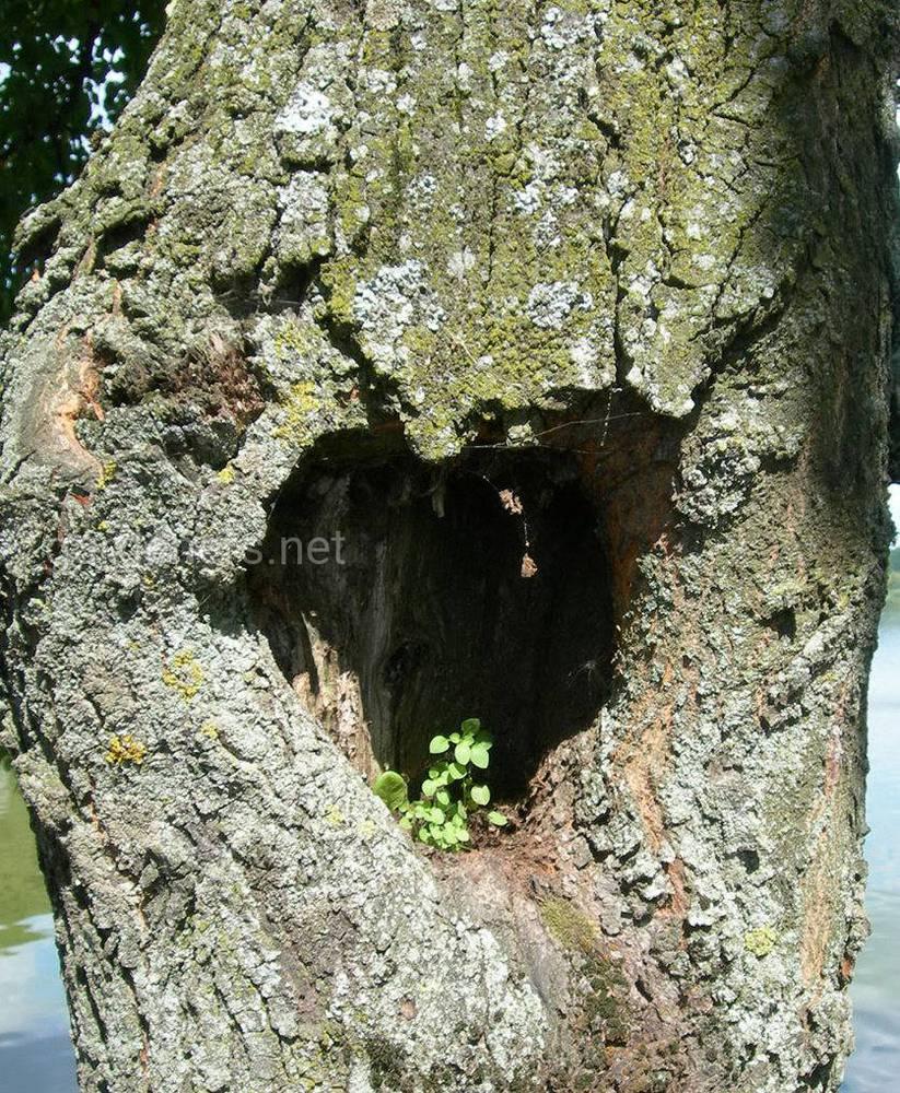 Что делать с дуплом на дереве в саду