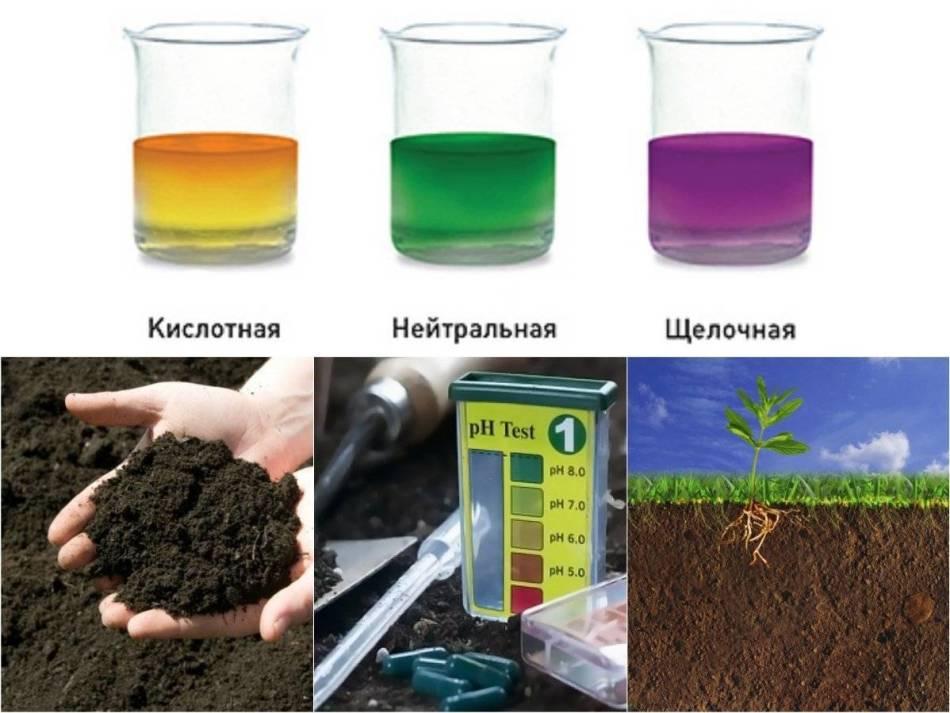 Индикаторы для определения кислотности