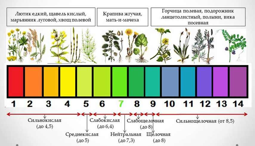 Растения-индикаторы кислотности