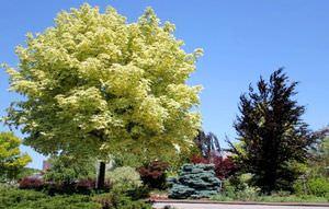 Какие есть деревья названия