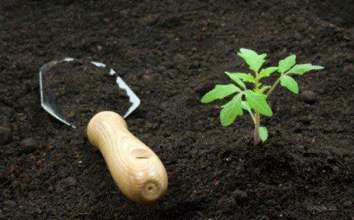 Облагораживание земли в саду