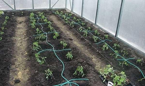 Капельный полив применяют на огородах, в теплицах. Наиболее эффективен он при выращивании овощей и плодовых