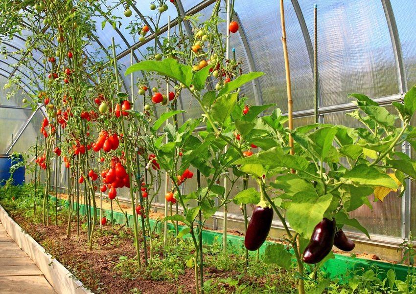 Продуманный обогрев теплицы обеспечит сбор урожая значительно раньше срока его созревания на открытом грунте