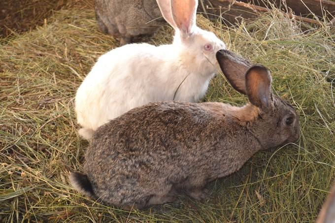 начинающий кроликовод