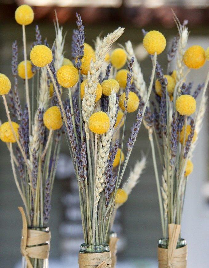 Барабанные палочки краспедии - для сада и для букетов