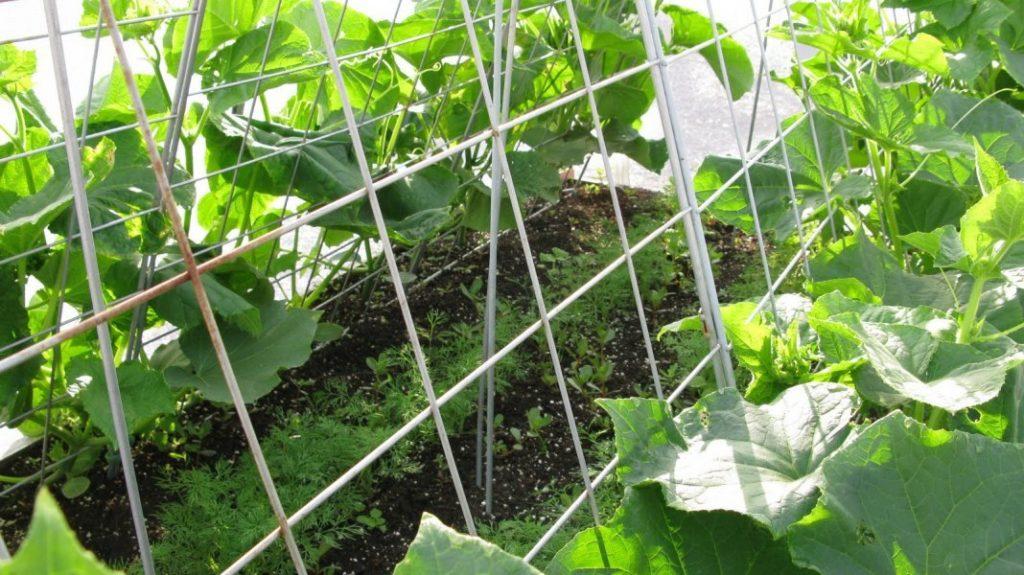Вертикальная формировка растений