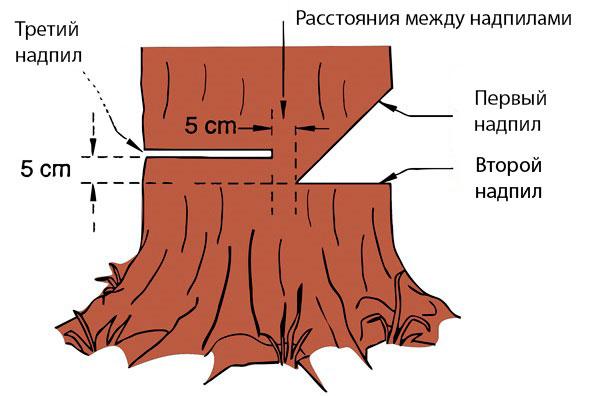 Последовательность распилки дерева
