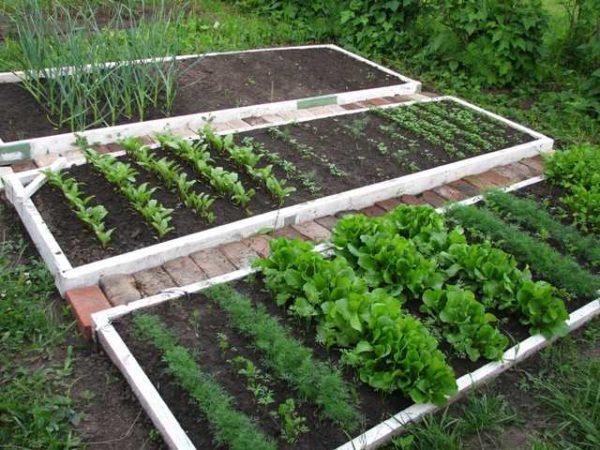 Умный огород - это сформированные, часто приподнятые или высокие грядки, в которых созданы необходимые условия для роста растений