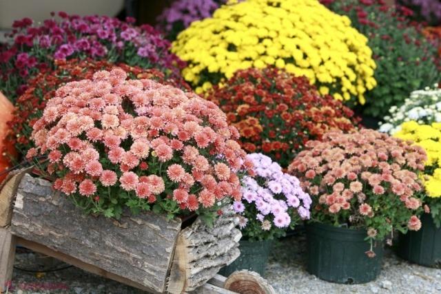 схема клумбы непрерывного цветения для начинающих