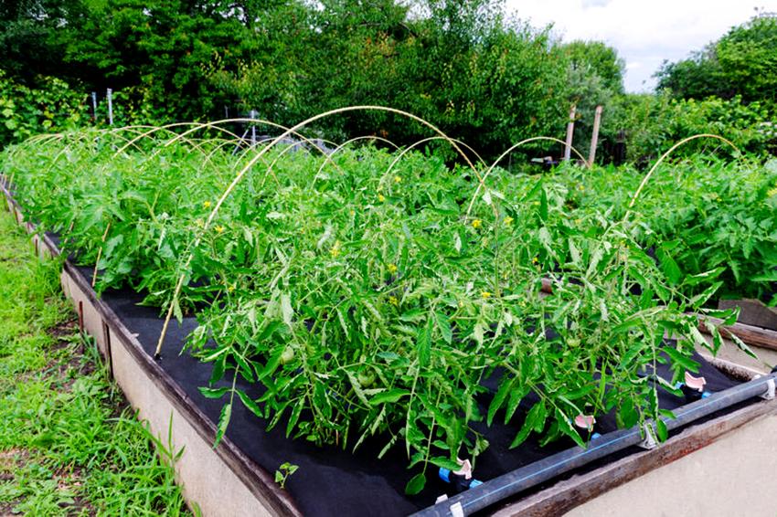 Плотное агроволокно черного цвета препятствует росту сорной травы