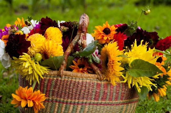 Цветы лесные осенью