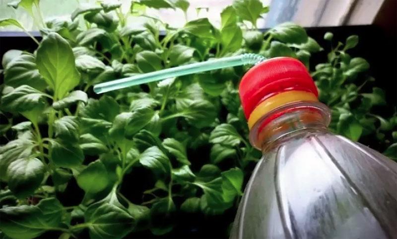Капельный полив можно сделать своими руками, для этого пластмассовую трубочку вставить в заранее проделанную дырочку в крышке пластиковой бутылки