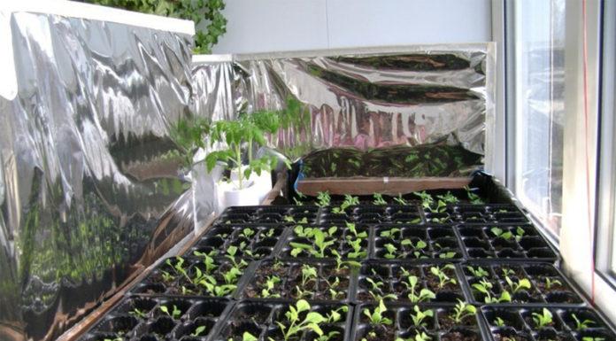 Зимние теплицы в квартире: 5 лучших способов увеличения урожайности