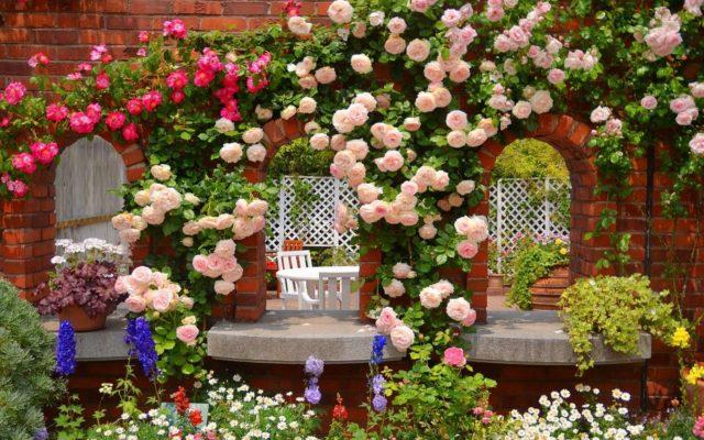 Самые популярные вьющиеся многолетники для сада, оформления заборов и беседок