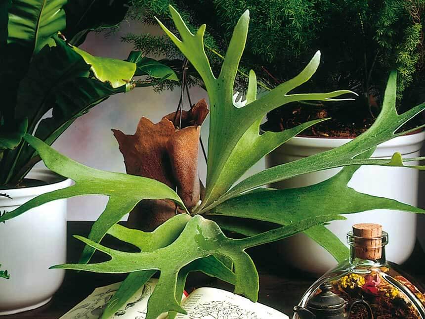 Описание и особенности растения
