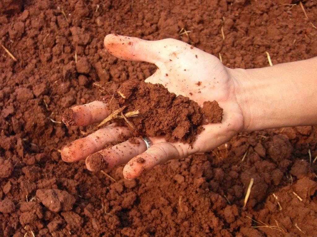почва с глиной