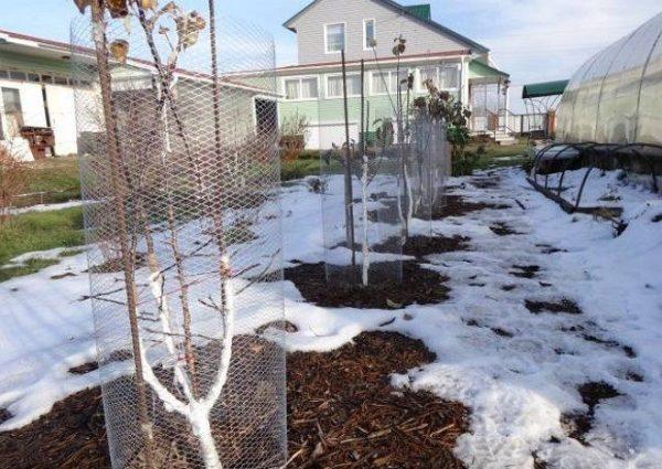 Сетчатая ограда для деревьев