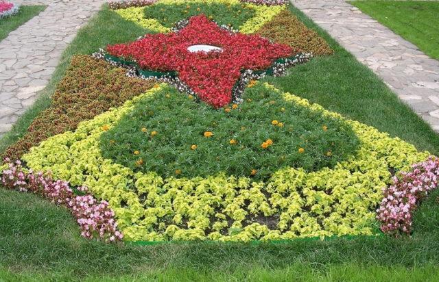 Цветник непрерывного цветения из многолетников: как создать, схемы, фото