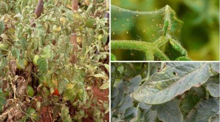 Основные вредители огорода, описание и способы борьбы