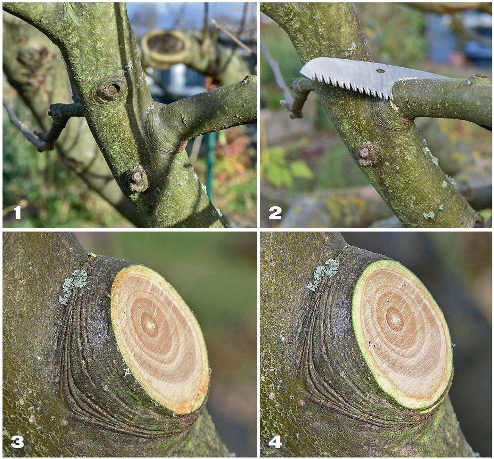 Правильная обрезка яблони весной: схемы подрезки и советы для начинающих