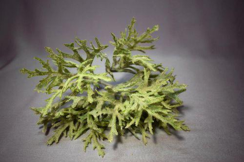 Цветок Оленьи рога (платицериум). Фото, как ухаживать, можно ли держать в доме, приметы