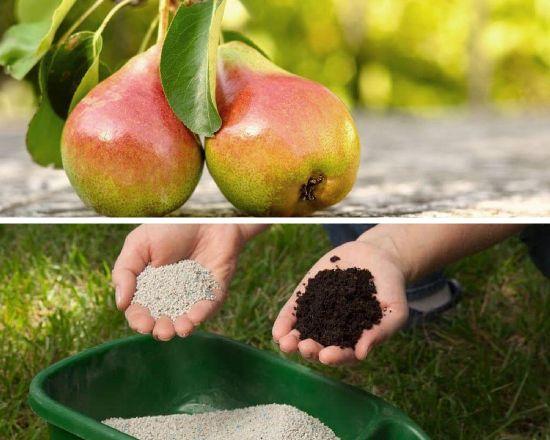 органика для плодовых