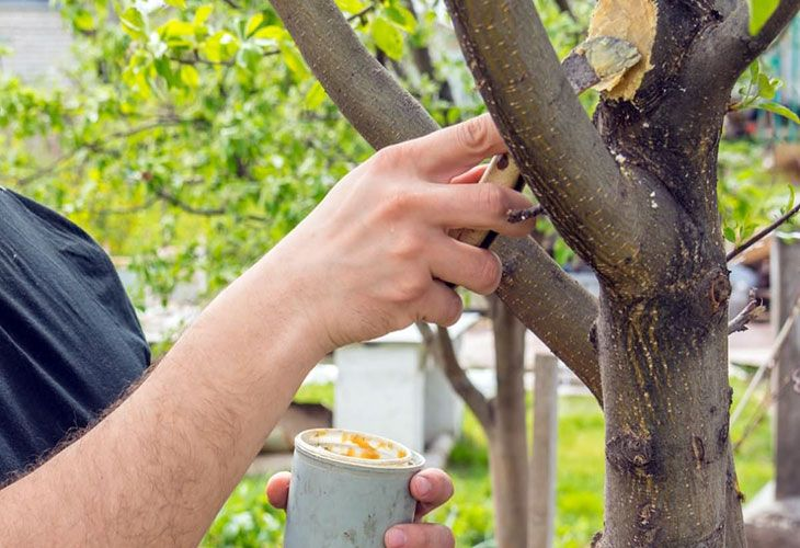 Обработка садовым варом