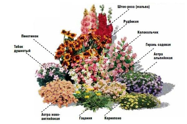 неприхотливые многолетники для клумбы цветущие все лето