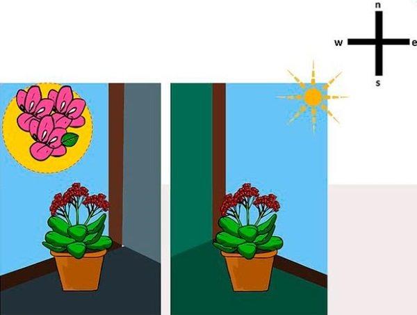 Мушмула. Как вырастить в домашних условиях. Фото, пересадка, если сохнут листья