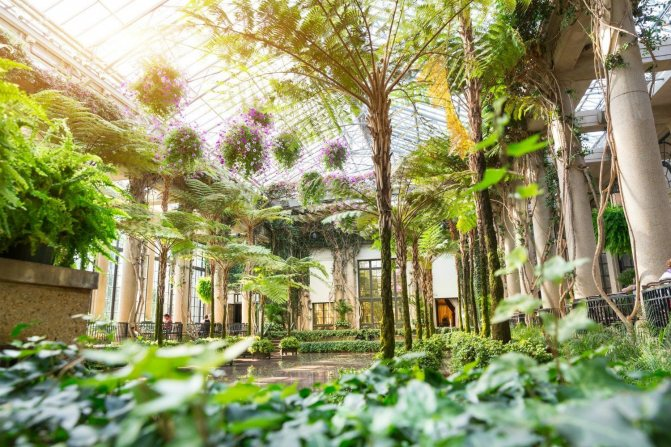 озеленение зимнего сада - советы по выбору растений