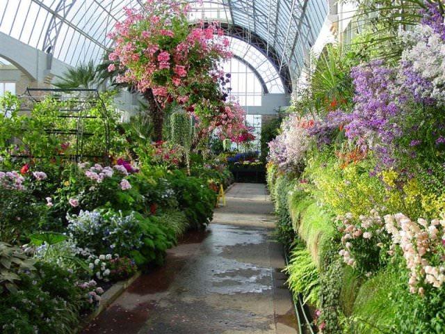 Перед тем как приступить к выбору растений для зимнего сада, необходимо четко представлять для чего будет использоваться оранжерея