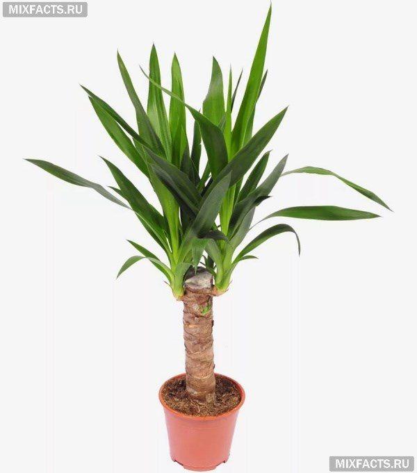 Растения для зимнего сада – список лучших вариантов для частного дома и квартиры