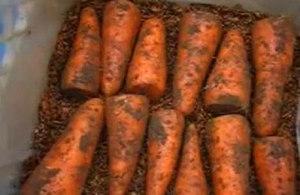 Хранение моркови на зиму
