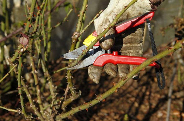 инструменты для обрезания роз
