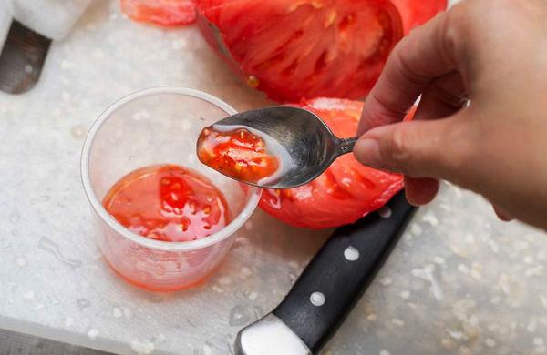 Простой способ сбора семян томатов