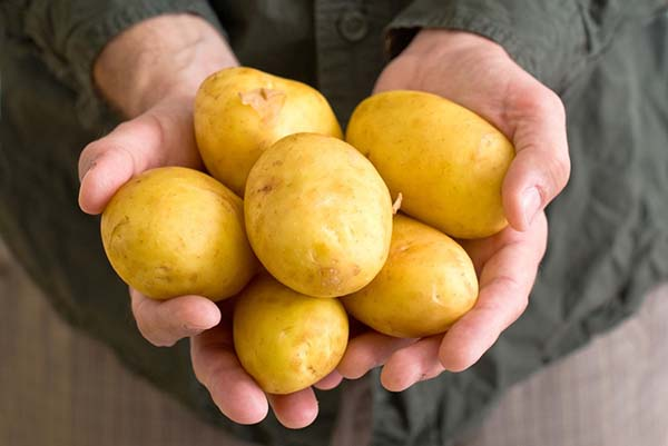желтые сорта картофеля