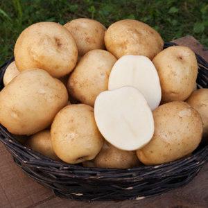 сорта белого картофеля