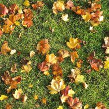 Уход за газоном осенью и его подготовка к зиме: стрижка, аэрация, подкормка