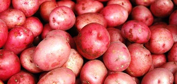 красные сорта картофеля